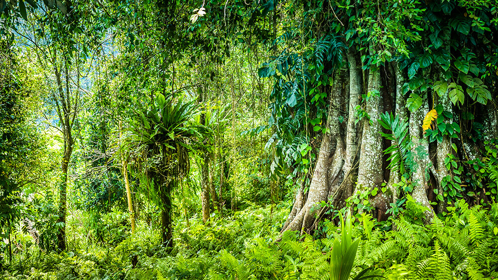 Ayahuasca and Safety
